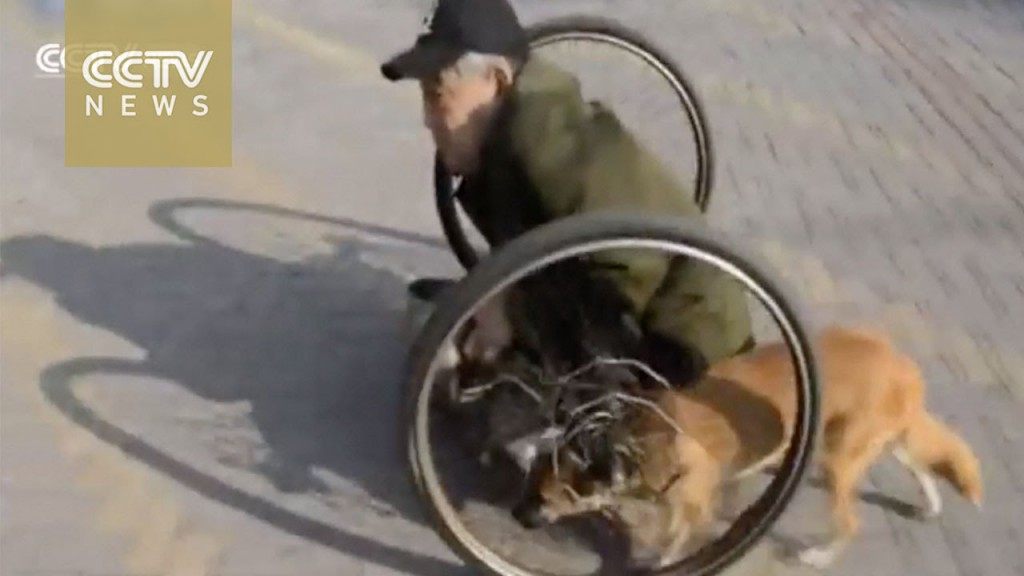 Σκύλος ζητιάνος αναπηρικά καροτσάκια