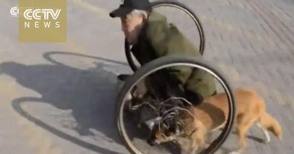 Πιστός σκύλος σπρώχνει το αναπηρικό καροτσάκι 86χρονου ζητιάνου