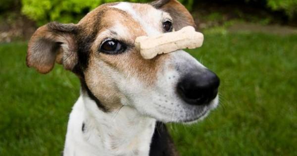 Μπισκότα φαρμακευτικής κάνναβης για… σκύλους