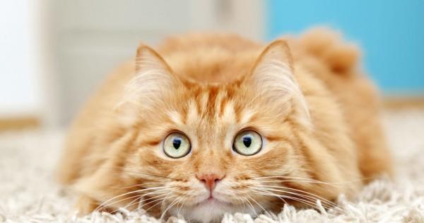 Τα 10 συχνότερα προβλήματα συμπεριφοράς στις γάτες και πώς να τα αντιμετωπίσετε