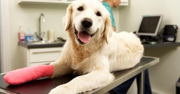 Πρώτες βοήθειες σκύλου: Τι πρέπει να κάνεις σε περίπτωση αιμορραγίας