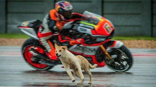 Σκύλος MotoGP
