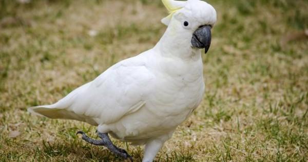 Ο παπαγάλος που τραγουδάει Ρουβά: «Θα σου κάνω μακαρόνια με κιμά για να φας!» (video)