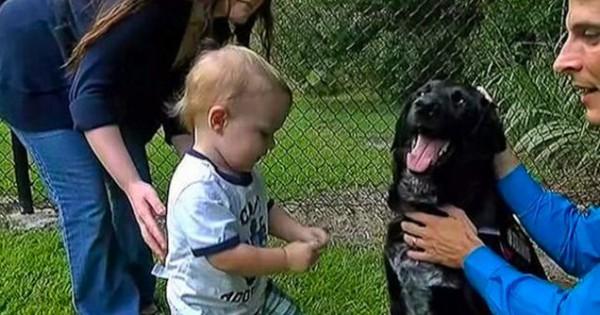Πώς ο σκύλος πρόδωσε babysitter που κακοποιούσε το μωρό