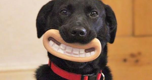 15 σκυλάκια που δεν έχουν ιδέα πόσο αστεία φαίνονται με τα παιχνίδια τους (φωτο)