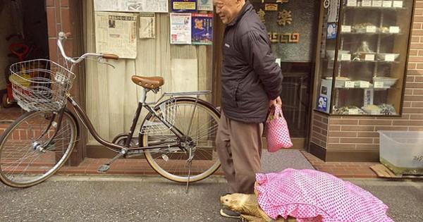 Βόλτα με τη χελώνα του στους δρόμους του Τόκιο! (Εικόνες)