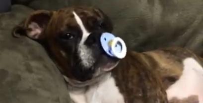 Και ο σκύλος θέλει την πιπίλα του (βίντεο)