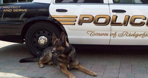 Θα σας αγγίξει: «Αντίο» με στρατιωτικές τιμές σε αστυνομικό σκύλο πριν την ευθανασία (Εικόνες)