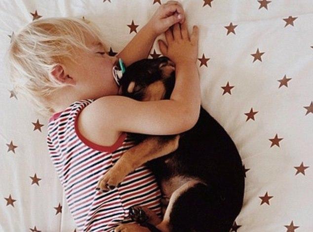 ύπνος Σκύλος κουτάβι αγοράκι αγκαλιά