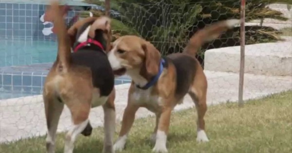 9 σκύλοι απολαμβάνουν την ελευθερία τους για πρώτη φορά