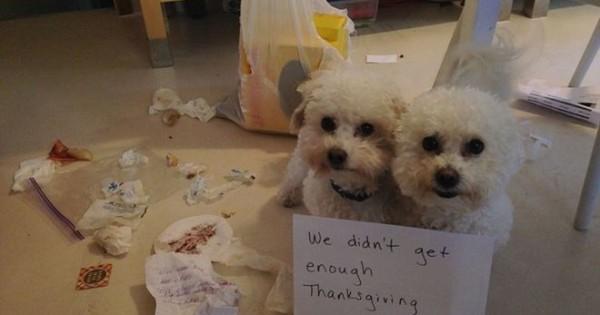 Ξεκαρδιστικό αφιέρωμα: Είκοσι ένοχοι σκύλοι απολογούνται