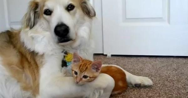 Όταν τα ζώα κάνουν παράξενες φιλίες