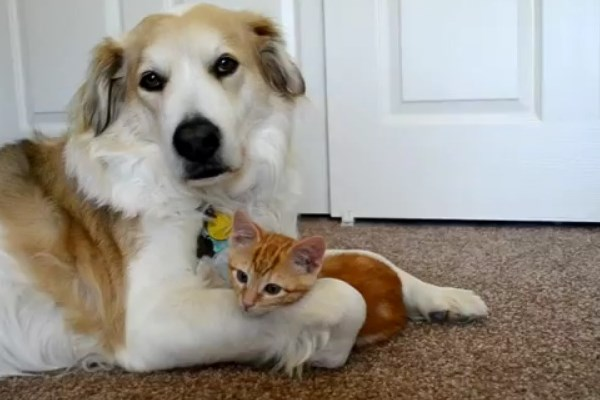 φιλίες ζώα