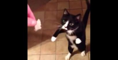 Σας παρουσιάζουμε τη γάτα – ζόμπι (Βίντεο)