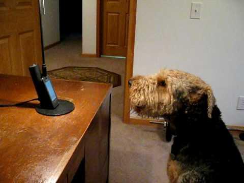 τηλέφωνο Σκύλος
