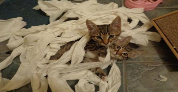 Ξεκαρδιστικό: 15 ζώα που πιάστηκαν επ 'αυτοφώρω να παλεύουν με το χαρτί υγείας (εικόνες)