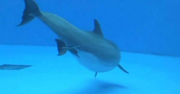 Μοναδικό βίντεο: Δείτε πώς γεννούν τα δελφίνια!