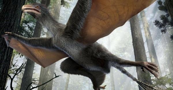 Ένας δεινόσαυρος ήταν ο «ξάδερφος» των πουλιών (Φωτογραφίες)