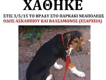 Εξαφάνιση σκυλιού