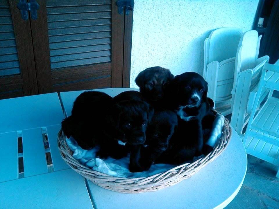 χαρίζονται σκύλοι Χαρίζονται Σκύλος κουτάβια