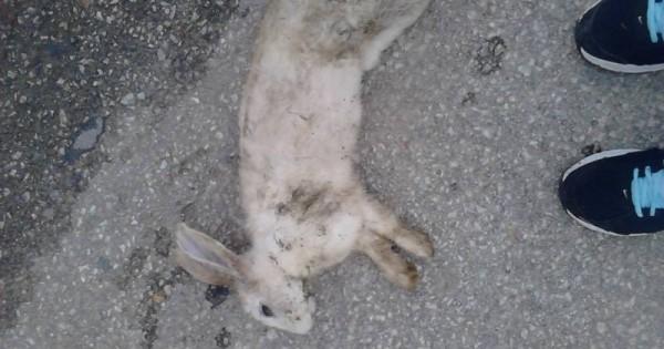 Δεκάδες νεκρά σκυλιά,  γάτες ακόμη και λαγοί από φόλες στην Πτολεμαΐδα – Σκληρές εικόνες με αδέσποτα και δεσποζόμενα νεκρά ζώα