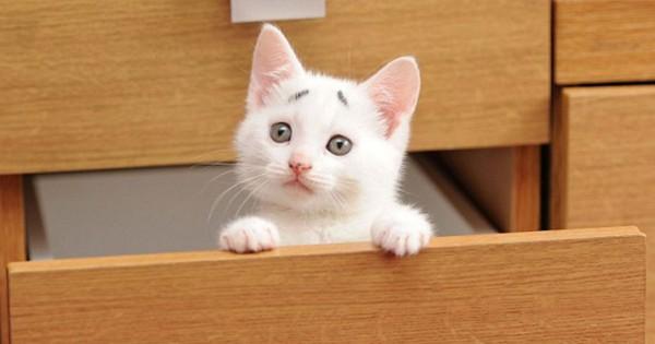 Η γάτα που γεννήθηκε με ένα μόνιμο βλέμμα έκπληξης! (Φωτογραφίες)