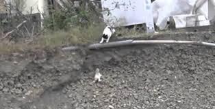 Η μαμά γάτα διασώζει το μικρό της (Βίντεο)