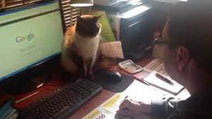 Όχι άλλο ίντερνετ για σήμερα (Βίντεο)