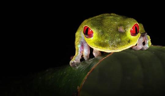 Βάτραχοι για… φίλημα! (Φωτογραφίες)
