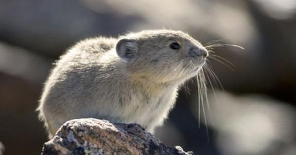 Θα αποδεκατίσουμε το ένα έκτο των βιολογικών ειδών στον πλανήτη (Φωτογραφίες)