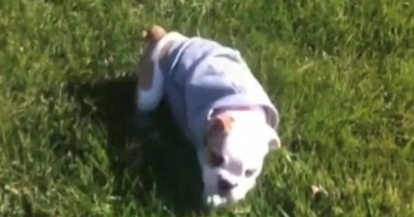 Όταν περιέγραψε τι κάνει ο σκύλος της όταν ξυπνάει το πρωί, κανείς δεν την πίστεψε. Πήρε την κάμερα και να τι κατέγραψε! (Βίντεο)