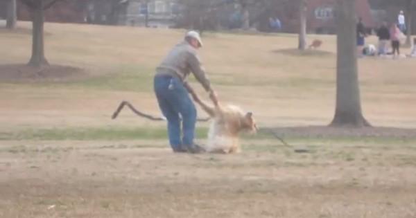 Ο σκύλος αρνείται να φύγει από το πάρκο (Βίντεο)