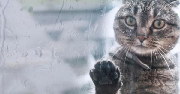 Εκπλητικές εικόνες ζώων που έρχονται αντιμέτωπα με τη βροχή