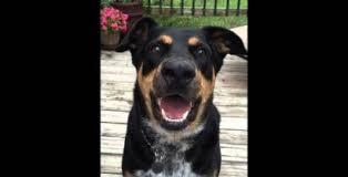 Ο σκύλος που μπορεί να ψιθυρίσει (Βίντεο)