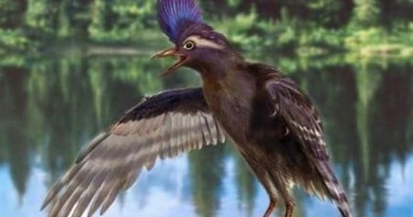 Ο αρχαιότερος συγγενής των πτηνών