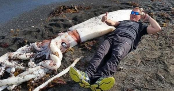 Η θάλασσα ξέβρασε ένα γιγάντιο καλαμάρι (Φωτογραφίες)