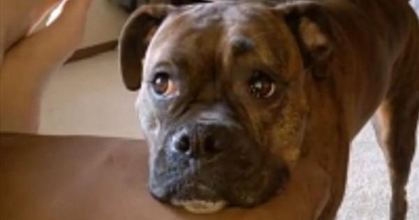 Αυτή η τρομερή σκυλίτσα έχει ένα απίθανο τρόπο να πείθει τους ανθρώπους να παίζουν μαζί της! Θα σας κάνει να χαμογελάσετε! (Βίντεο)