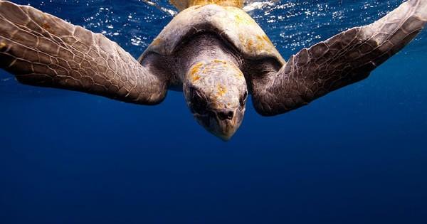 Ένα μαγικό ταξίδι κάτω από το νερό! (Εικόνες)
