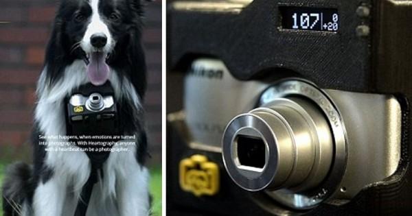 Φωτογραφική μηχανή για… σκύλους (Βίντεο)