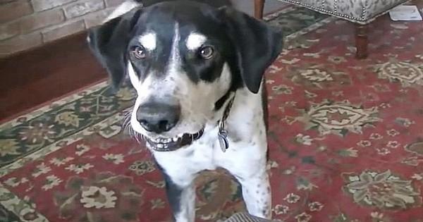 Σκύλος ικετεύει τον ιδιοκτήτη του να τον πάει στη «γυναίκα» της ζωής του – Αυτόν τον απολαυστικό «διάλογο» θα τον θυμάστε για καιρό! (Βίντεο)