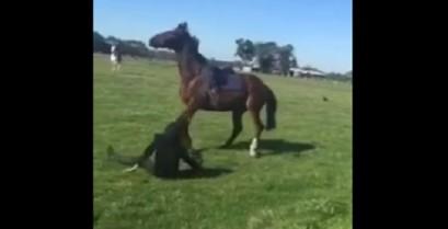 Το άλογο δεν δέχεται προσβολές (Βίντεο)