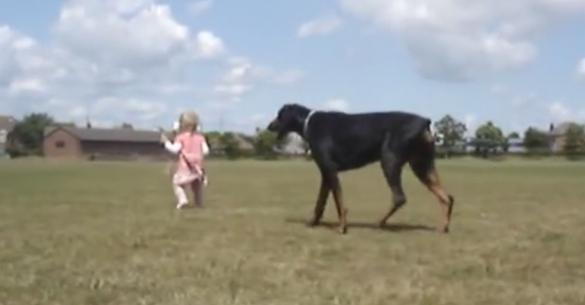 Δείτε πώς ένα Ντόπερμαν προστατεύει ένα μικρό κοριτσάκι! (Βίντεο)