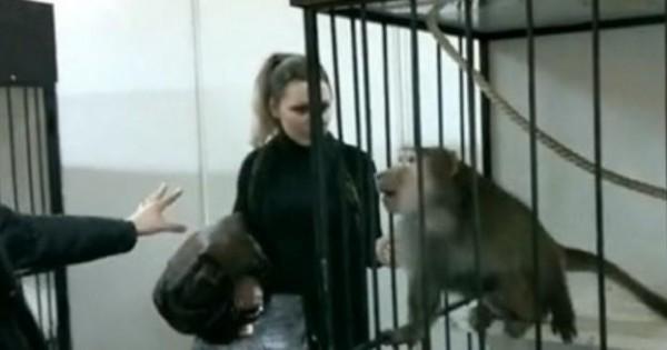 Ο ζηλιάρης μπαμπουίνος (Βίντεο)