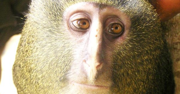 O πίθηκος με τα… ανθρώπινα μάτια! (Εικόνες)