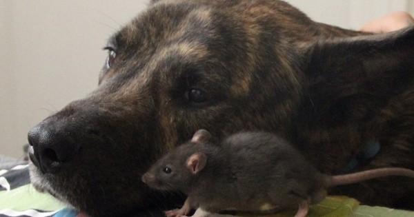 Σκύλος και… ποντίκι, τα καλύτερα φιλαράκια! (Εικόνες)