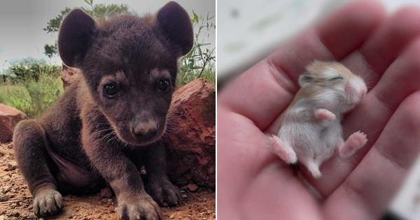 20 ζώα που δεν τα έχετε ξαναδεί σε μικρή ηλικία! (Εικόνες)