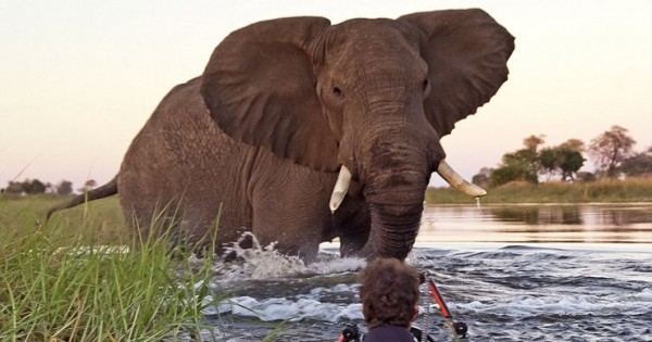 Τετ-α-τετ με έναν ελέφαντα! (Εικόνες)