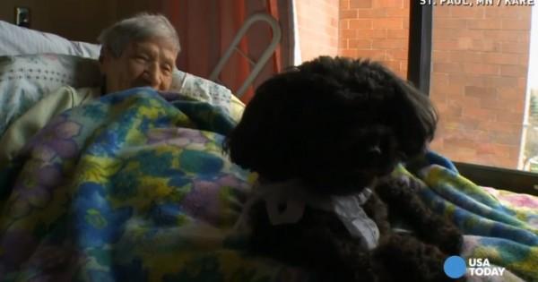 Ένας μικρός σκύλος προσφέρει αγάπη και χαμόγελα (Βίντεο)
