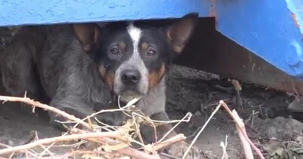 Ένας αδέσποτος σκύλος διασώζεται και υιοθετείται (Βίντεο)