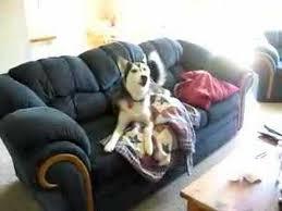 Ο πιο ανυπάκουος σκύλος (Βίντεο)